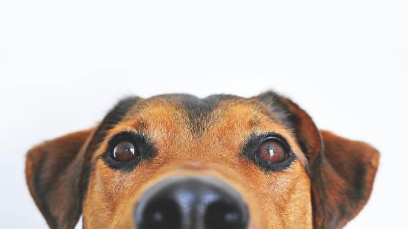 Dog eye care
