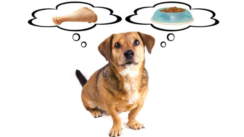 Feeding your dog with raw or dry food