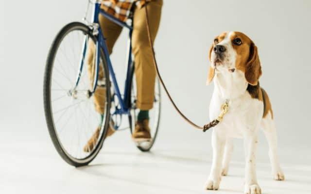 Getting ready to go biking with dog