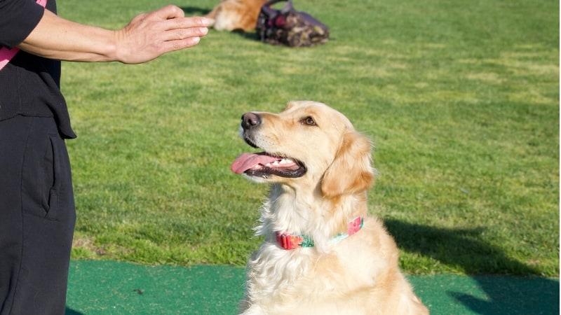 Teaching dog commands