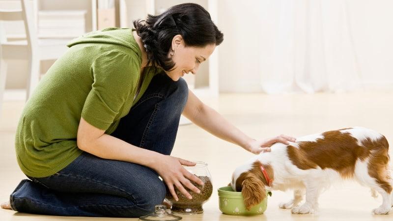 woman feeding her puppy