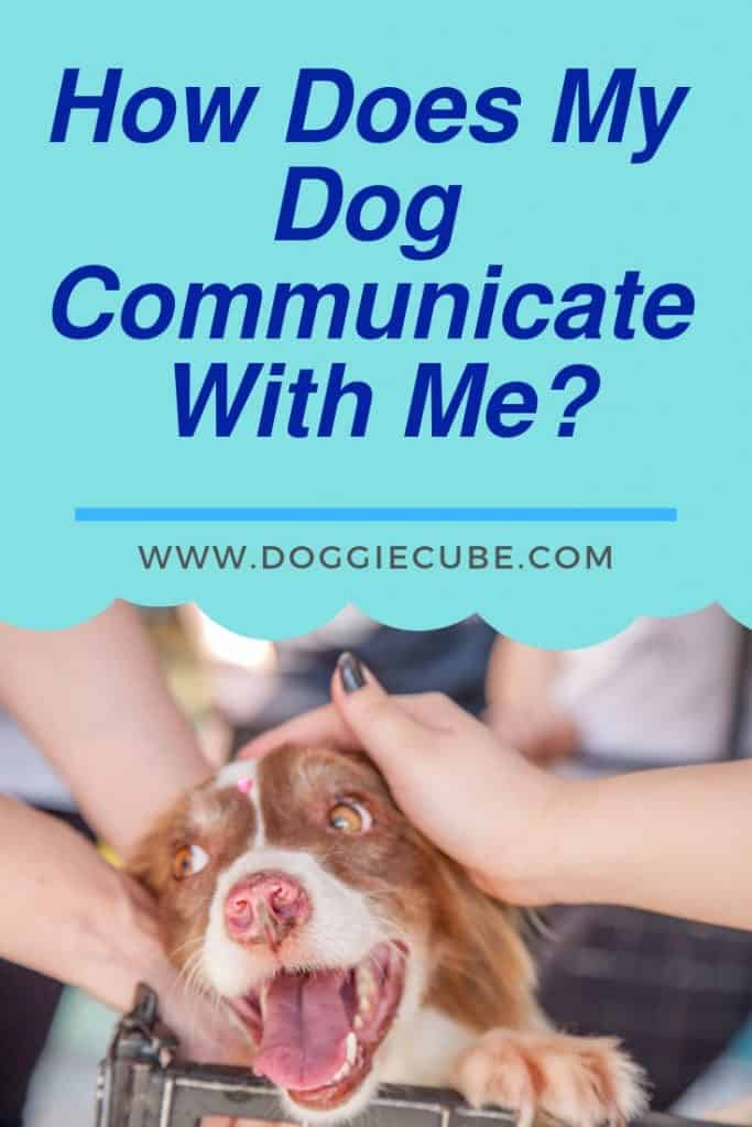 How dogs communicate their feelings?