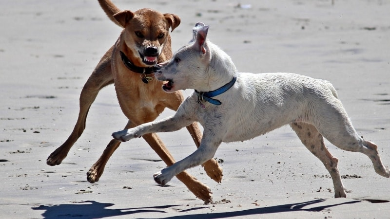 Dogs communicate with body language