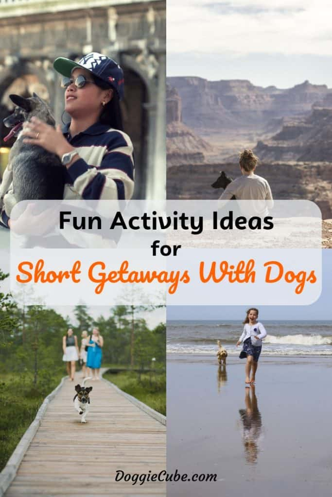 Fun activity ideas for short getaways with dogs