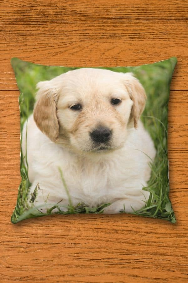 Golden Retriever Spun Polyester Square Pillow