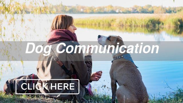 Dog Communication Category