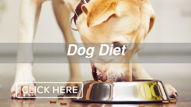 Dog Diet Category