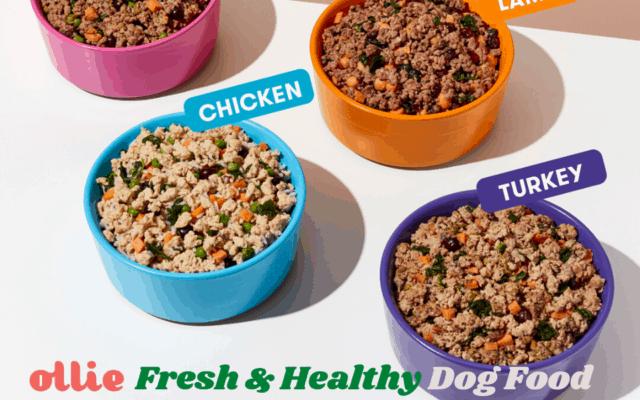 Ollie fresh & healthy dog food