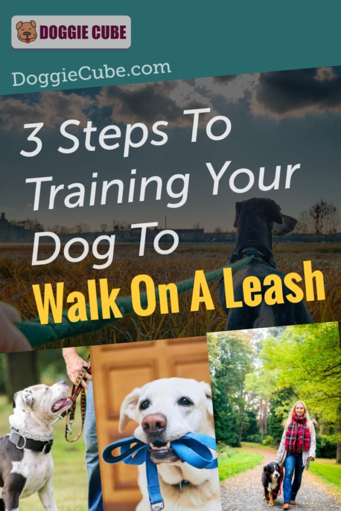 3 Steps To Training Your Dog To Walk On A Leash