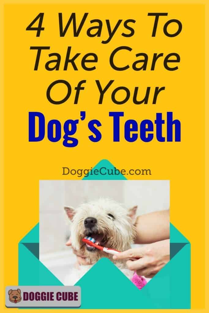 4 Ways To Take Care Of Your Dog's Teeth