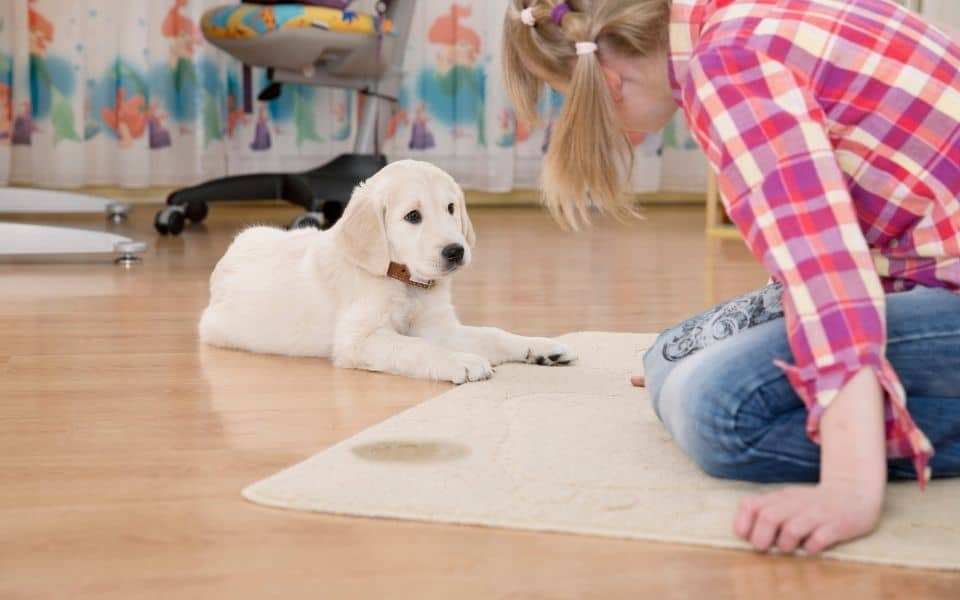 Common Mistakes When Training Your Puppy