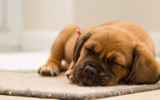 Help your puppy sleep through the night