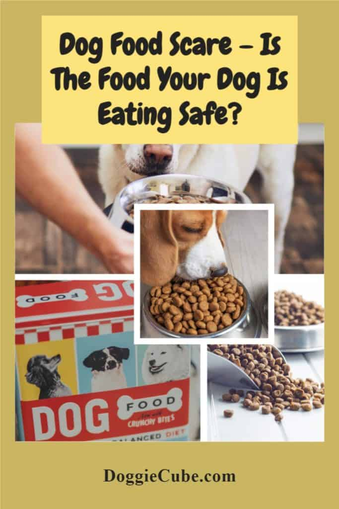 Dog Food Scare - Is The Food Your Dog Is Eating Safe?