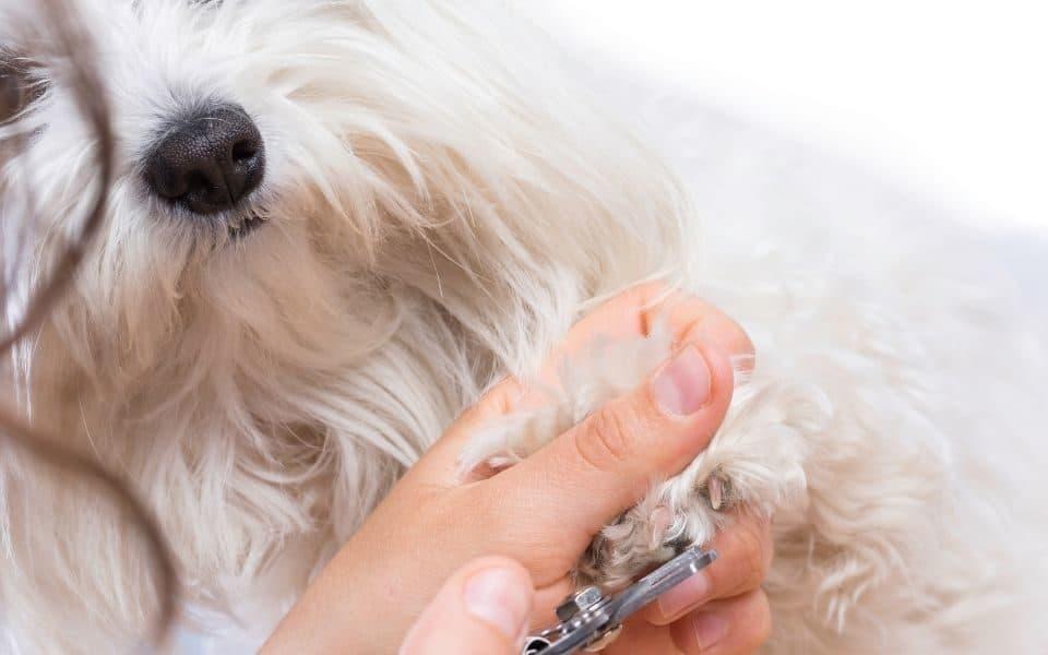 Dog nail care